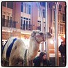 There's a camel outside our apartment.