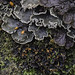 Moon Lichens - Photo (c) Richard Droker, some rights reserved (CC BY-NC-ND)