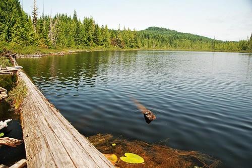 Joes Lake near Coal Harbour, Vancouver Island, British Columbia