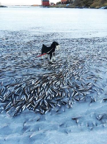 frozen-school-of-fish[1]