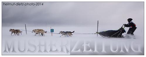 Femundlopet 2014: F400, Trine-Marie-Flåtten