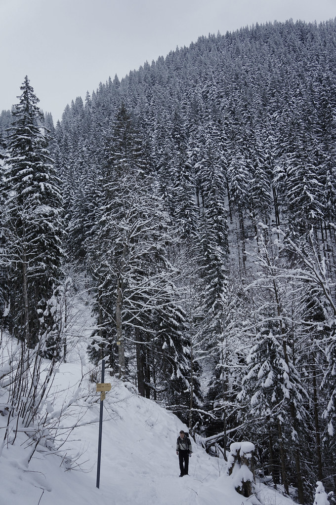 Mountain of Trees