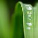 Quelques gouttes d'eau ©Polo-Foto
