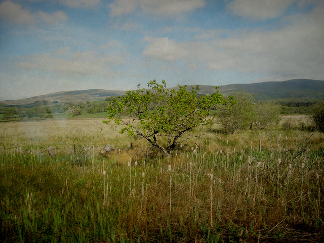 train window tree