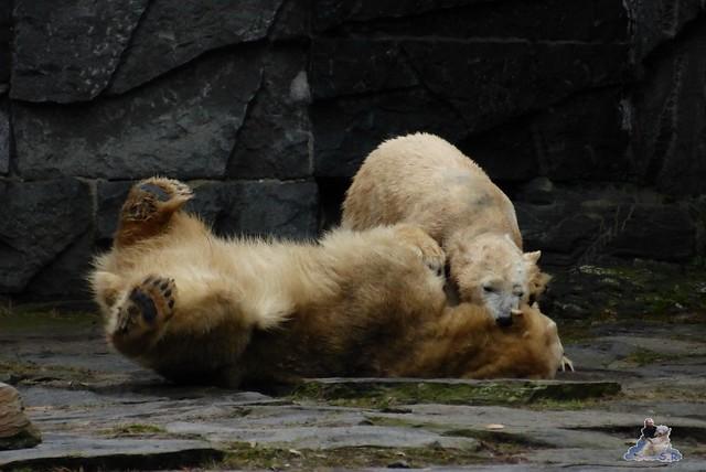 Tierpark Berlin 24.01.2015 22