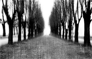 Il cuore rallenta e la testa cammina..nei sentieri costretti in un palmo di mano