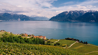 Lavaux | by Zech Photography