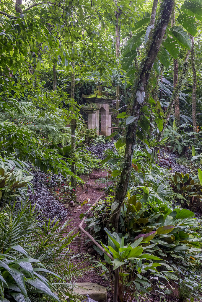 Jungle path leading from the guest house to the garden entrance at the main house