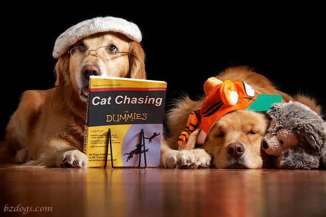 Cat Chasing for Dummies