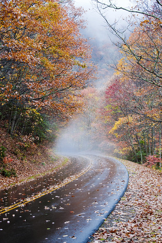 red mist mountains color colour fall wet beautiful leaves weather yellow misty fog wonderful nc nikon asheville foggy peaceful northcarolina spooky foliage mysterious magical blueridgeparkway drizzle sharkshock