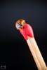 Baby Ladybug by Lumenatic