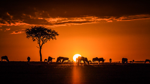 sun tree nature fauna lumix kenya wildlife ngc pflanze panasonic national kenia baum gnu geographic umwelt maasaimara naturlandschaft naturereignisse