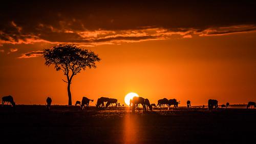 sun tree nature fauna lumix kenya wildlife ngc pflanze panasonic national kenia baum gnu geographic umwelt maasaimara naturlandschaft naturereignisse