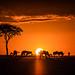 sunup in the Maasai Mara Kenya. by ラルフ - Ralf