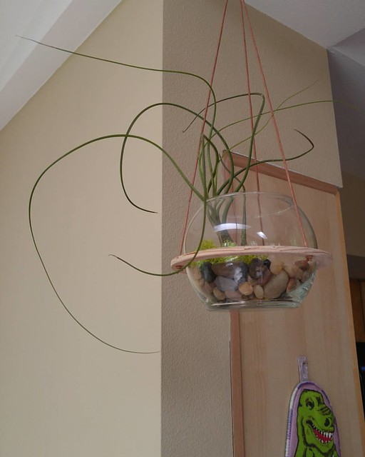"""Obviously I can""""t name all of my air plants, but this one""""s my favorite and she""""ll be called Monica."""