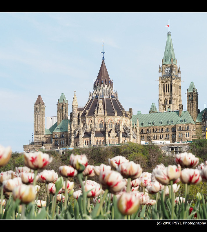 Parliament Hill with tulips