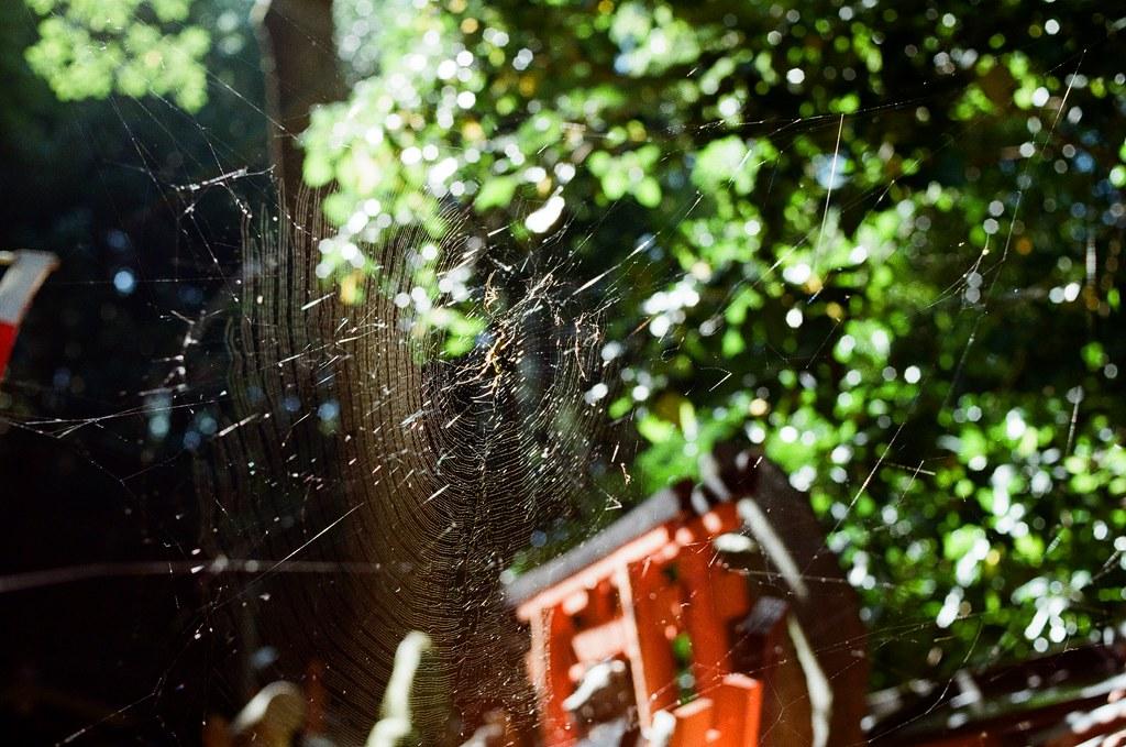 伏見稻荷 京都 Kyoto, Japan / Kodak ColorPlus / Nikon FM2 在路上看到有點大的蜘蛛網,那時候想到,如果蜘蛛結網,那表示應該是相對安全的地方。  但如果是突發狀況,我想任誰都無可避免吧!  Nikon FM2 Nikon AI AF Nikkor 35mm F/2D Kodak ColorPlus ISO200 0993-0017 2015/09/29 Photo by Toomore