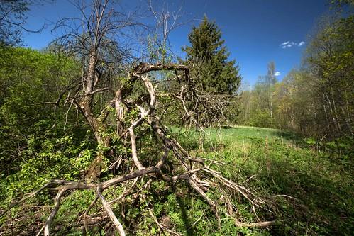nature spring loodus vana kevad õunapuu kohtru