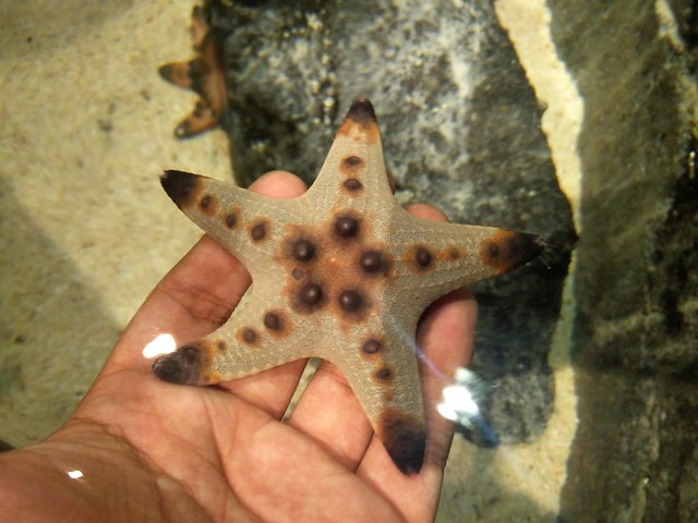 Aquaria KLCC (6)
