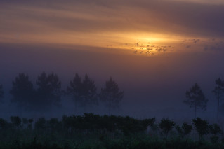 Honorable Mention - Morning Fog - Richard Acheson