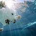Kilo Submerged by *Knowledge*