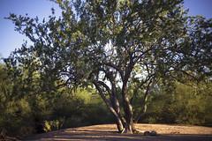 Tree - Tbird park Oct 2013