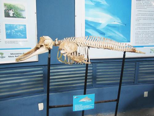 museu projeto peixe boi