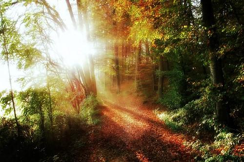 autumn sun mist sunshine fog forest sunrise germany nebel hessen herbst german sunrays sonnenaufgang larissa herbstwald hesse odenwald sonnenlicht forestofodes canonpowershotg10 weschnitztal bphotor
