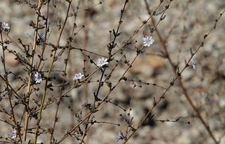 Twiggy Wreath Plant