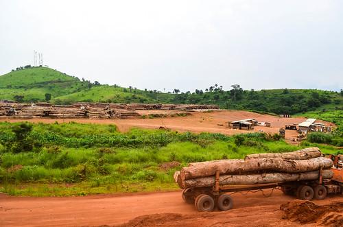 Timber logging storage area, Congo