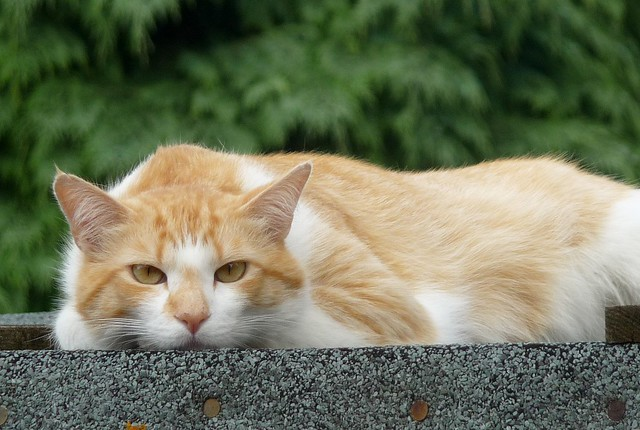 Cat on the shed.