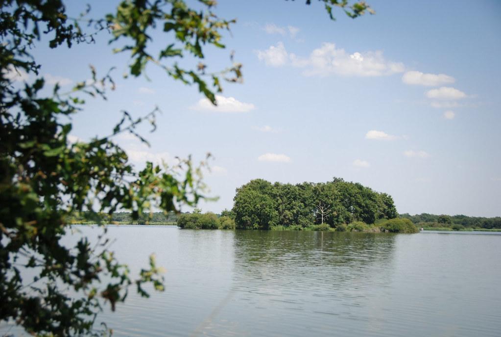 Dormir dans les arbres - étangs, îlots et herbes folles