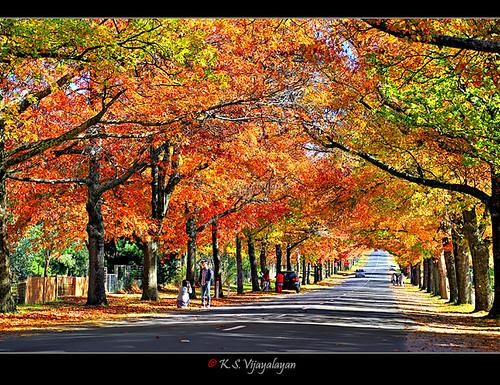Autumn in Macedon Ranges