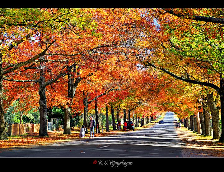 Autumn @ Macedon Ranges
