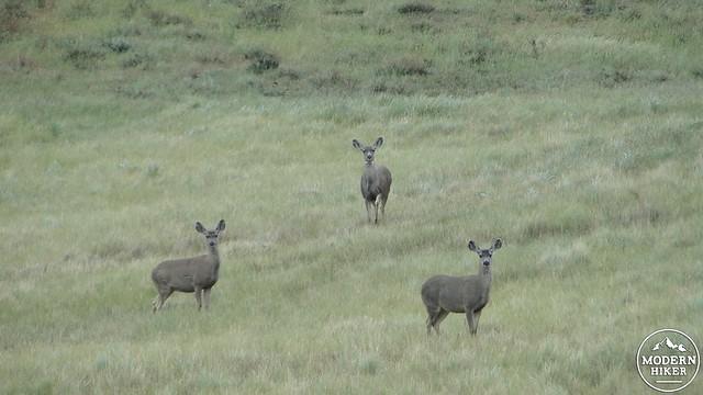 Mule Deer - 2014-04-25 at 14-00-54