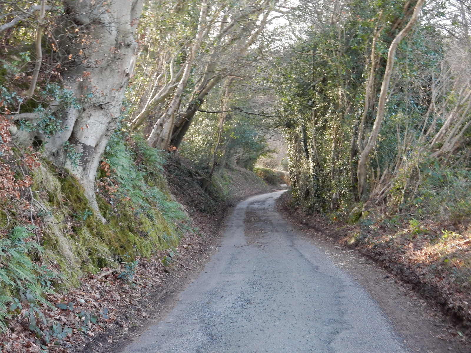 twisty lane Etchingham to Wadhurst