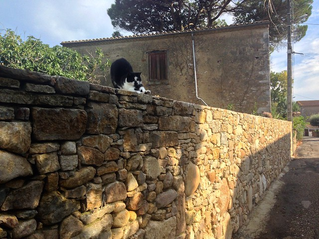 Cat on a Wall in Montolieu