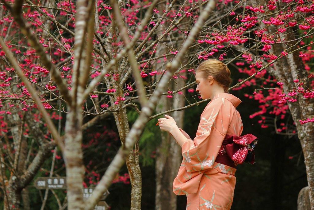 九族櫻花祭 (1)