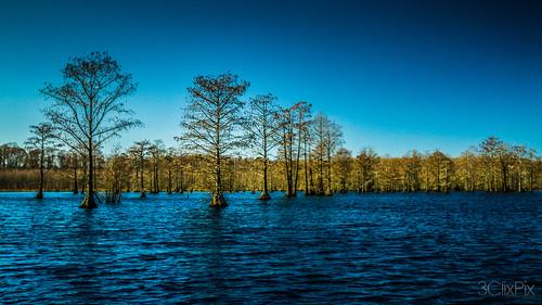 northcarolina swamp polarizer redspringsnc brycehoover hoovdaddy editjockey 3clixpix r3v00h3cyr8 hodginspond