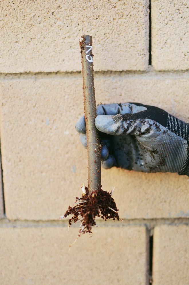 winter gardening 2015