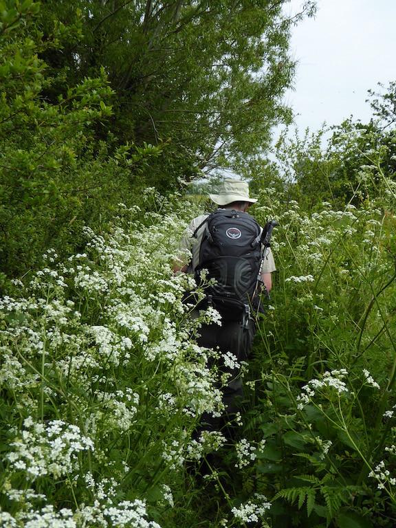 Overgrown path Thame Circular walk