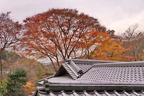 【写真】2012 紅葉 : 瑠璃光院/2020-06-07/IMGP7695