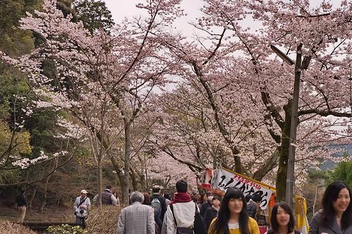 【写真】2013 桜 : 哲学の道/2018-12-24/IMGP9194