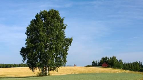 summer nature finland nokia untouched 1020 lumia kangasala