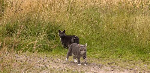 Kittens 18.jpg
