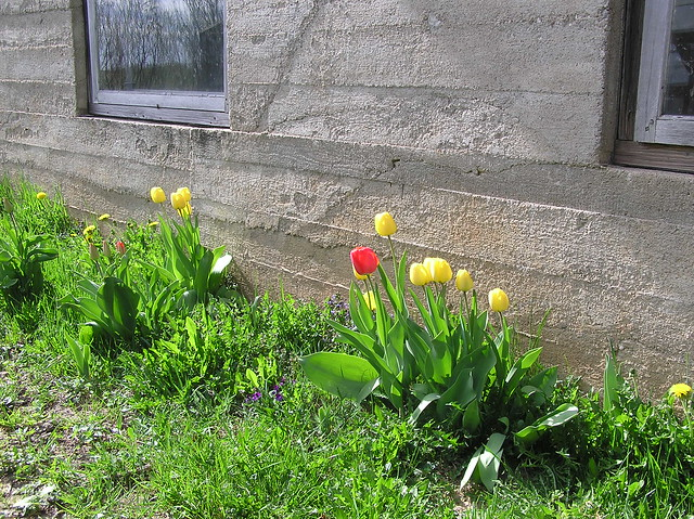Tulip bed back in 2011