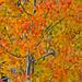 2nd Place - Flora - Al Perry - Aspen Colors