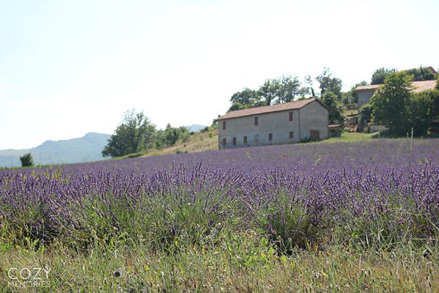 Thoard & lavender