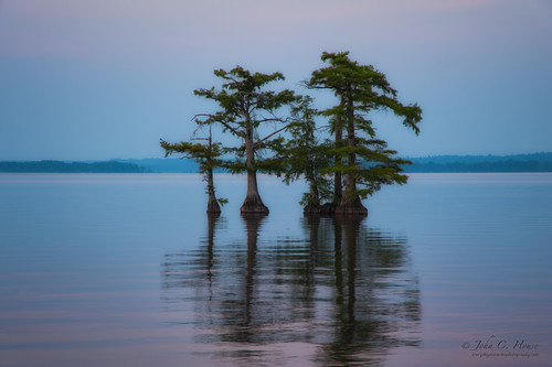 water nikon tennessee nik cypress reelfootlake everydaymiracles d700 slicesoftime johnchouse inspiringcreativeminds