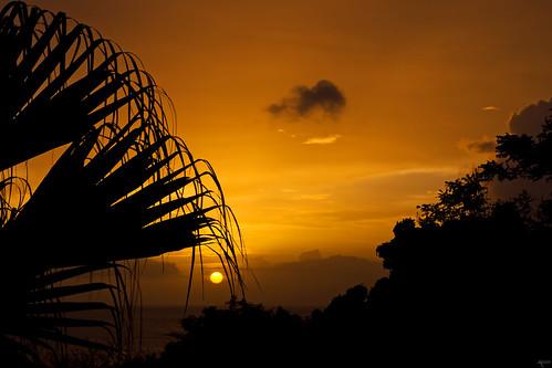 sunset orange silhouette warm glow silhouettes tropical caribbean tones tropics guadeloupe grandanse deshaies